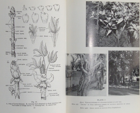 Image for Lowson's Textbook of Botany