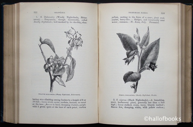 Image for Flowers of the Field
