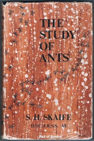 Image for The Study Of Ants