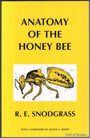 Image for Anatomy Of The Honey Bee