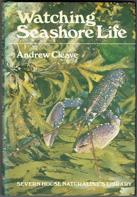 Image for Watching Seashore Life